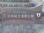 コスモスと水辺 日高総合運動公園