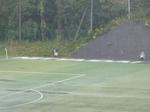 人工芝ピッチの端には「NITTAIDAI」の文字